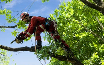 find trusted rated Worcestershire tree surgeons