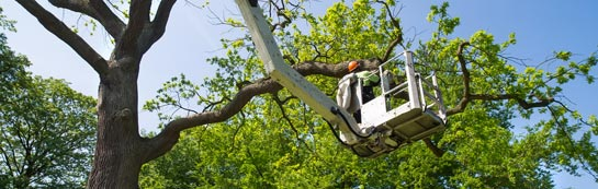 Worcestershire tree surgery services