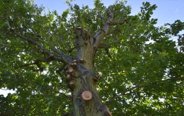 what is Worcestershire tree surgery?